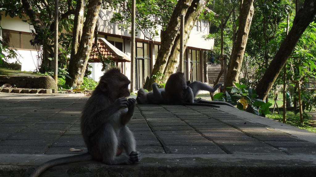 Bali056-Ubud