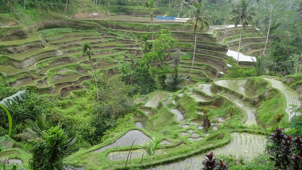 Bali087-Tumbakasa