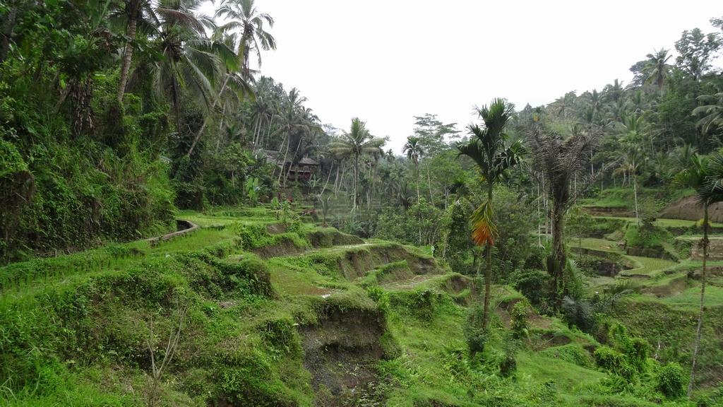 Bali096-Tumbakasa