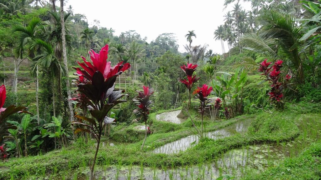 Bali097-Tumbakasa