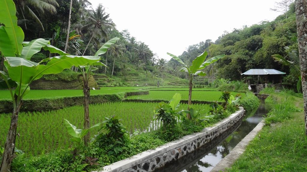Bali098-Tumbakasa