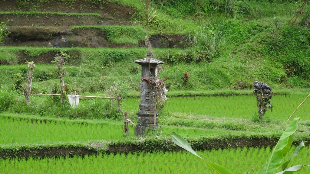 Bali099-Tumbakasa