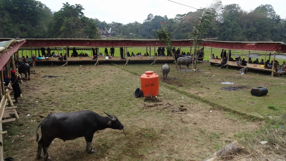 Sulawesi023-Toraja