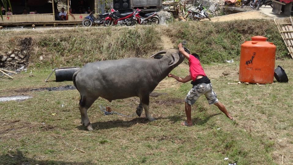 Sulawesi035-Toraja