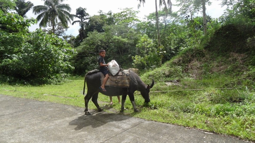 Philippinen0290-Camiguin
