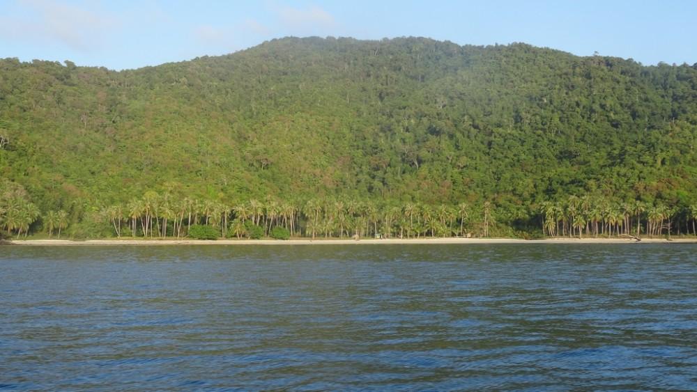 Philippinen0936-Coconut Garden Island